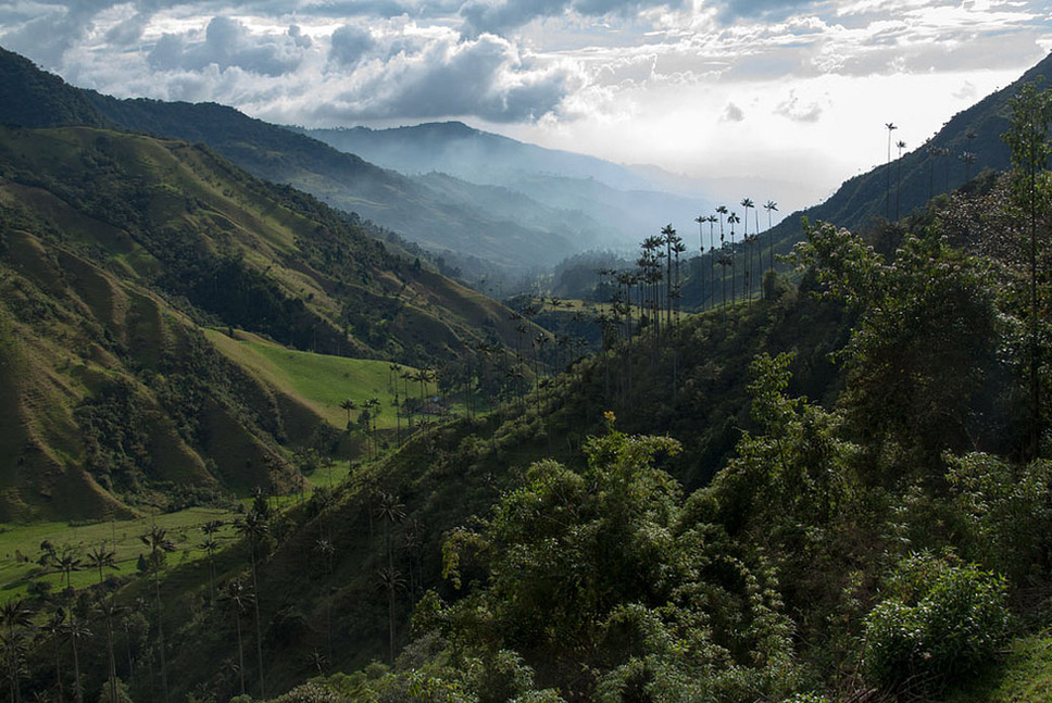 20 Vale Cocora, Colômbia