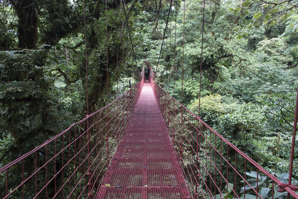 22 Monteverde Cloud Forest, Costa Rica
