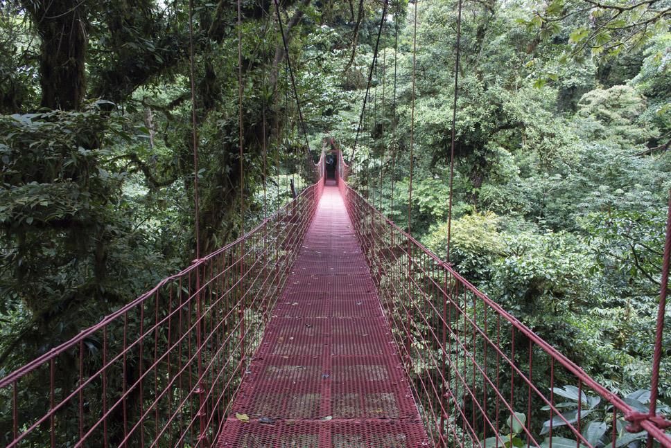 22 Monteverde Cloud Forest, Costa Rica