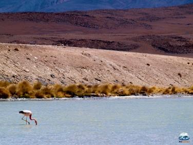 Lagunas Altiplánicas, Deserto de Atacama